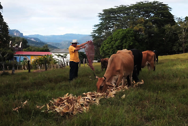 Luego de trabajar por años en fábricas textiles, granjas y haciendas, Orlando Márquez regresó a su terruño, 25 años después, para vivir de la tierra y el pastoreo.