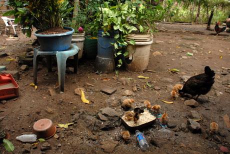 Cuento tesoro de Chalatenango El Salvador Get_img?ImageId=397